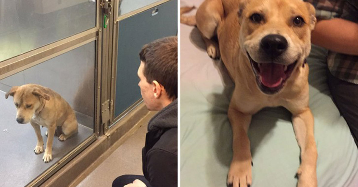 forskjell_adoptivhund