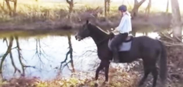 hest_toppbild